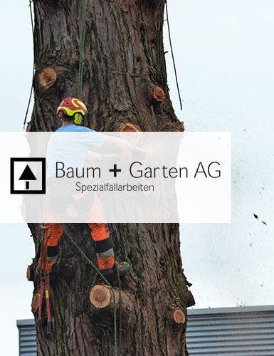 baum_und_garten_385x500_m.jpg
